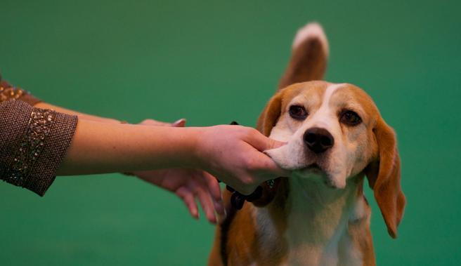 ¿Se puede deprimir tu perro después de las vacaciones?