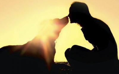 Conoces la Misión Espiritual de los Perros en Nuestra Vida ?