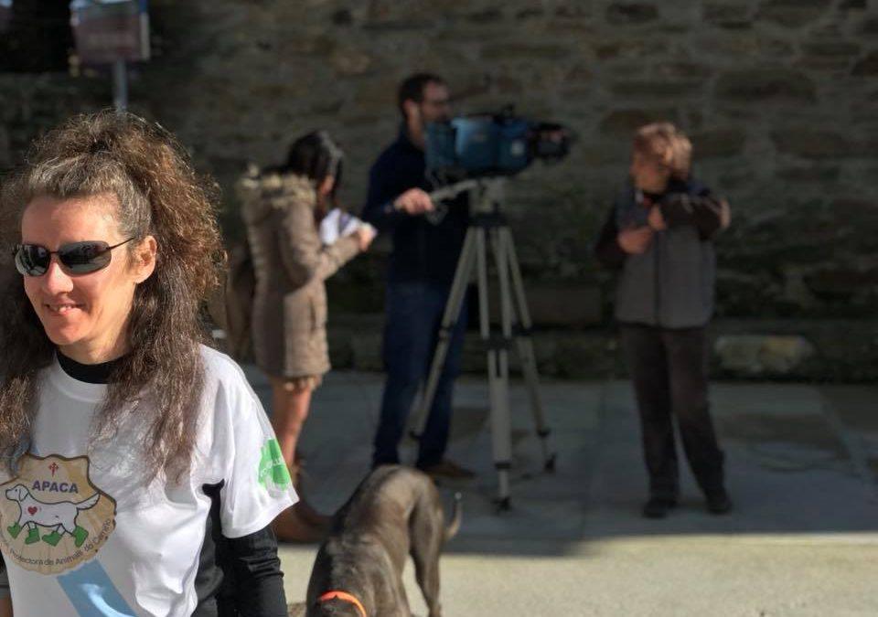 Los perros ya pueden ganarse la 'compostela' en el Camino