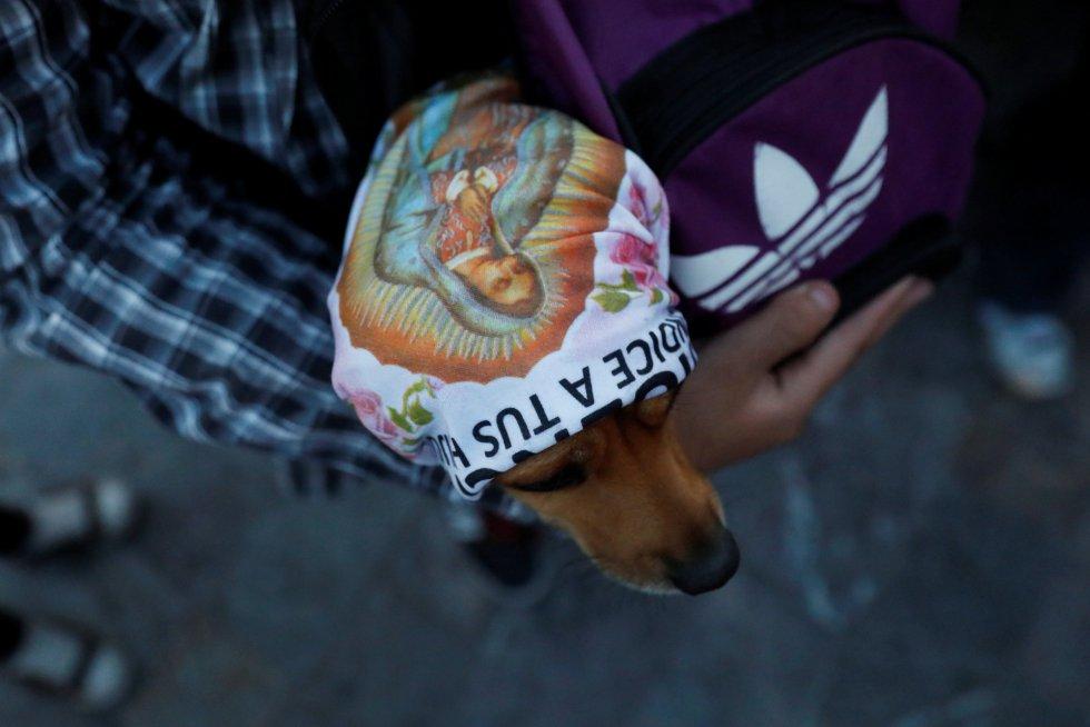 Perros peregrinos son olvidados cada año en la Basílica de Guadalupe en México