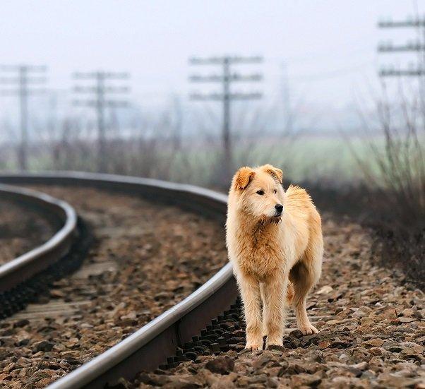 Guía para encontrar a perros perdidos