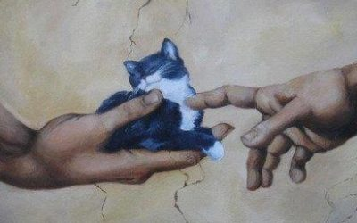 Melide solidaria cos animais do Camiño