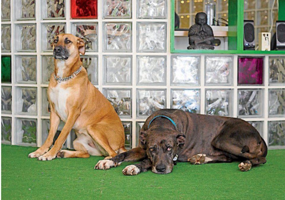 "Todo listo para la ""Dogfluencer Meeting"" en la Ruta Xacobea"