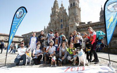 'Dogfluencers Meeting', una peregrinación simultánea y solidaria, corona el Obradoiro