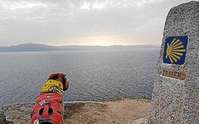Los 'Dogfluencers' llegarán mañana a la capital gallega